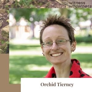 Orchid Tierney author
