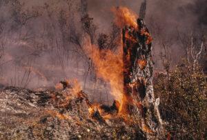 Fitz Creek Fire In Bad Luck 9-12-73