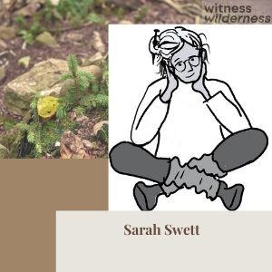 Sarah Swett artist