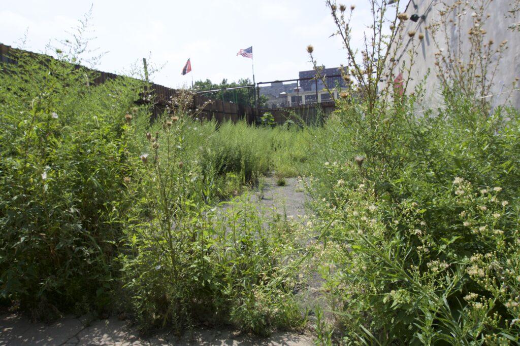 urban weed garden